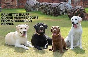 Greenbriar-Labs-at-Montage-Palmetto-Bluff