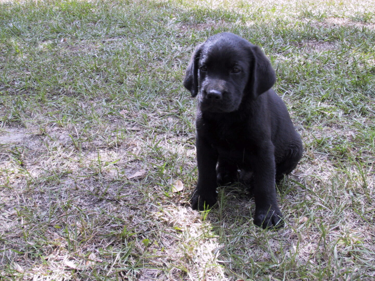 A black puppy sitting on the dirt