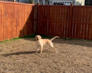 A dog out in the yard