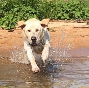 A dog splashing water