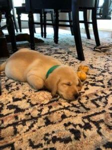 A sleeping puppy on a carpet