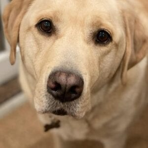 A closer look at a dog's face