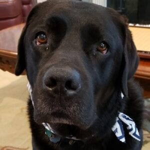 A closer look at a black dog's face