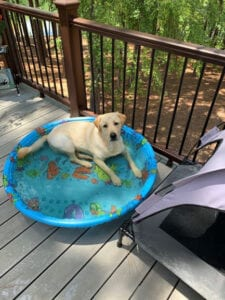 A dog in an inflatable pool