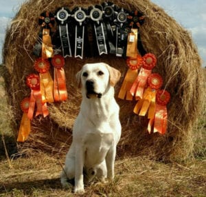 A dog in front of a hay pile
