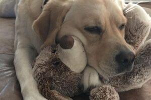 A dog with a teddy bear
