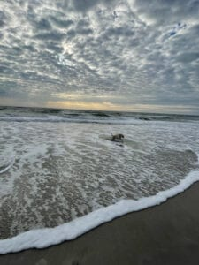 A dog playing at the beach
