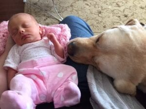 A dog next to a sleeping baby