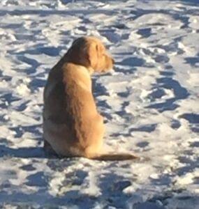 A puppy sitting on snow