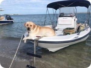 A dog sitting inside a boat
