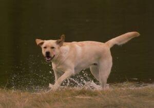 A dog running near the water