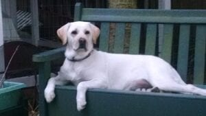 A dog resting on a wooden bench