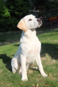A dog sitting confidently