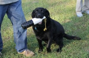 A black dog carrying a bottle