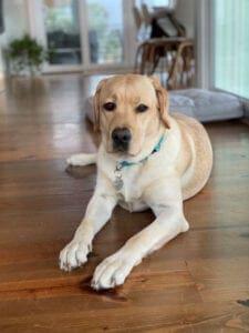 A dog with a light blue collar