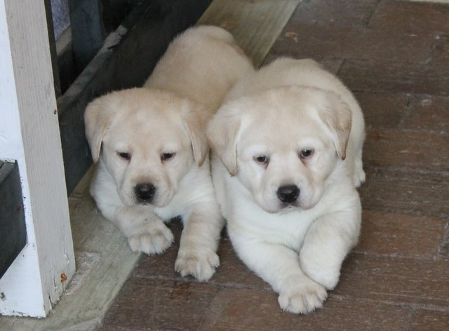 Two puppies next to each other