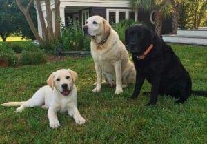 Three dogs on grass