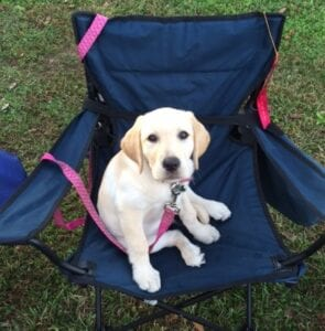 A dog sitting on a foldable chair