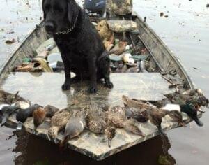 A black dog with six hunted ducks