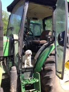 A puppy in a tractor