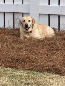 A dog on dried up pile of grass