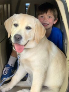 A dog with a kid inside a crate
