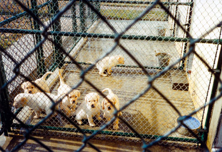 Puppies in the kennels