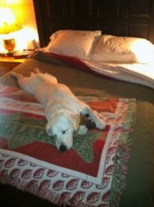 A sleeping dog on a large bed
