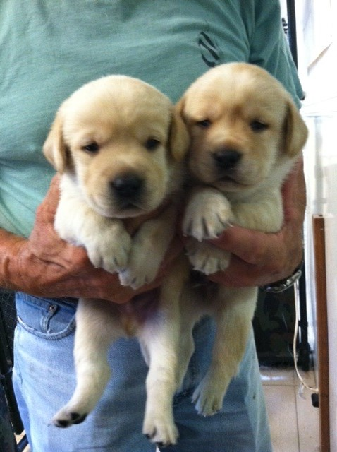 Two puppies being carried